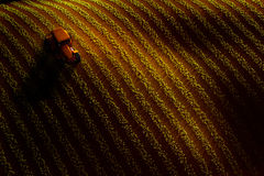 Aerial view of field with rows of growing crop or vegetables and tractor ploughing it. Sunset or sunrise light Royalty Free Stock Image