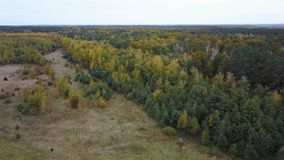 Aerial view of the field with trees covered with yellow foliage stock footage