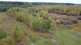 Aerial view of the field with trees covered with yellow foliage stock video