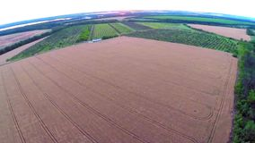 Aerial view of field wheat stock video