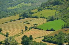 Aerial view of fields, meadows with hay and forest Royalty Free Stock Image