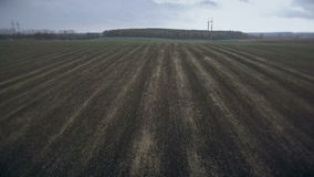 Aerial view of fields sown with wheat only against the backdrop of the forest. HD stock video