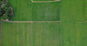 Aerial view of Fields with various types of agriculture in rural Thailand stock footage