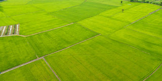 Aerial view of Fields with various types of agriculture in rural Royalty Free Stock Photo