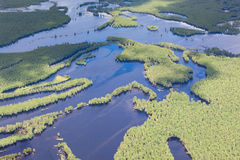 Aerial view flooded forest plains in summer. Stock Image