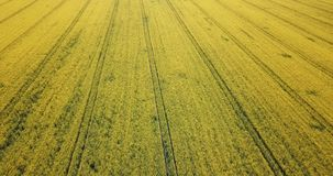Aerial view of the flowering rapeseed field stock footage