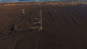 Aerial View. Flying around the tree. Lonely tree in the tundra stock video