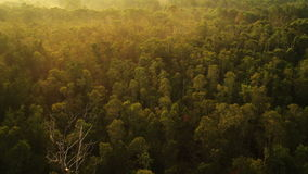 Aerial View. Flying birds. Mangrove forest in Krabi province, Thailand stock footage