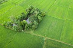 Aerial view from flying drone. Beautiful green area of young rice field or meadow in rainy season stock photos