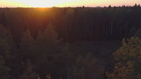 Aerial View. Flying over the beautiful autumn trees in forest. stock footage
