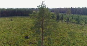 Aerial View. Flying over the beautiful autumn trees in forest. Aerial camera shot. Autumn / Fall landscape. Low altitude flight stock footage