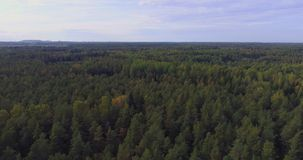 Aerial View. Flying over the beautiful autumn trees in forest. Aerial camera shot. Autumn / Fall landscape. Low altitude flight stock video