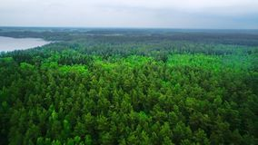 Aerial View. Flying over the beautiful forest trees. Aerial camera shot. Landscape panorama. stock video