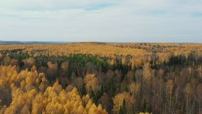 Aerial View. Flying over the beautiful sunny forest trees. Aerial camera shot. Landscape panorama stock video