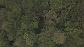 Aerial view flying over green tree tops of dense forest. Shooting in the summer stock video