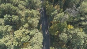Aerial view flying over old patched two lane forest road with car moving green trees of dense woods growing both sides stock video