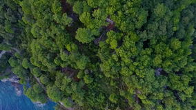 Aerial View: Flying over the sea and the forest stock footage