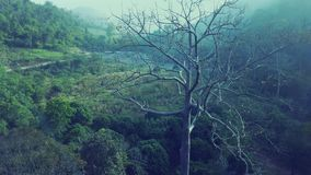 Aerial view, flying zoom in the big tree. With beautiful water fall and green trees background on sunrise,Landscape nature with aerial camera shot,Chiangmai stock video footage