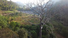 Aerial view, flying zoom in the big tree. With beautiful water fall and green trees background on sunrise,Landscape nature with aerial camera shot,Chiangmai stock video