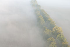 Aerial view of the foggy autumn alley Royalty Free Stock Images