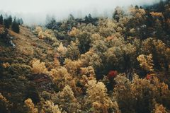 Aerial view of a foggy autumn forest stock images