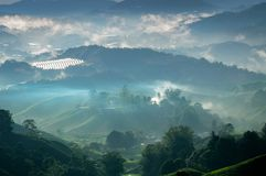 Aerial view foggy tea plantation mountain highland smoky boiler. Merry Christmas and Happy New Year 2018.