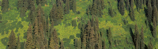 Aerial view of forest Royalty Free Stock Photo