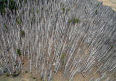 Aerial view of forest Stock Photos
