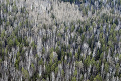 Aerial view of forest. Stock Photos