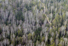 Aerial view of forest. Stock Image