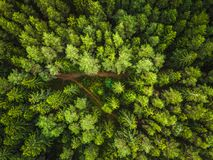 Aerial view of the forest royalty free stock photography