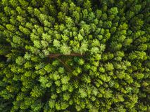 Aerial view of the forest royalty free stock image