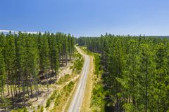 Aerial view of a forest stock photos