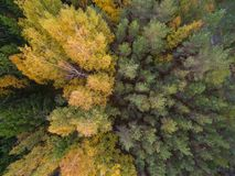 Aerial view of forest in autumn stock image