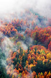Aerial view of forest in autumn with fog Royalty Free Stock Images