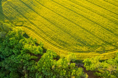 Aerial view of forest with blooming field royalty free stock photography