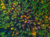 Aerial view of forest during calm autumn day royalty free stock images