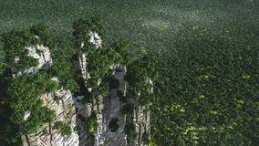 Aerial view of forest. And cliffs Stock Photography