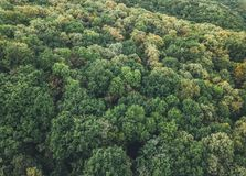 Aerial view of the forest and clouds. In the autumn Royalty Free Stock Image