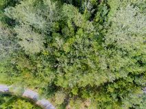 Aerial view of a forest. Aerial view of a decidous temperate forest crossed by a road Stock Photo