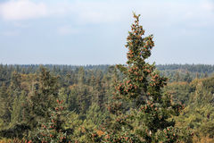 Aerial view forest Dutch national park Veluwe in autumn Royalty Free Stock Photography