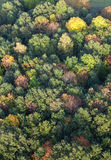 Aerial view of forest at fall Royalty Free Stock Image