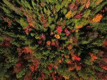 Aerial view of forest during fall Stock Photo