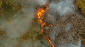 Aerial view Forest fire. Busuanga, Palawan, Philippines. stock images
