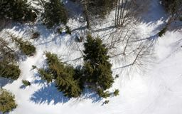 Aerial view of the forest of firs and pines with snow Royalty Free Stock Photos