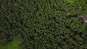 Aerial view of forest. Green Park view from above. Aerial view stock video