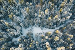 Aerial view of a forest after a heavy snowfall severe winter weather conditions. Aerial winter image shot with a high resolution drone stock photo