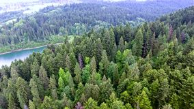 Aerial view of forest in hills. Aerial view of forest in mountains stock video