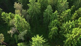 Aerial View Of Forest stock footage