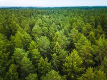 Aerial view of the forest stock photo